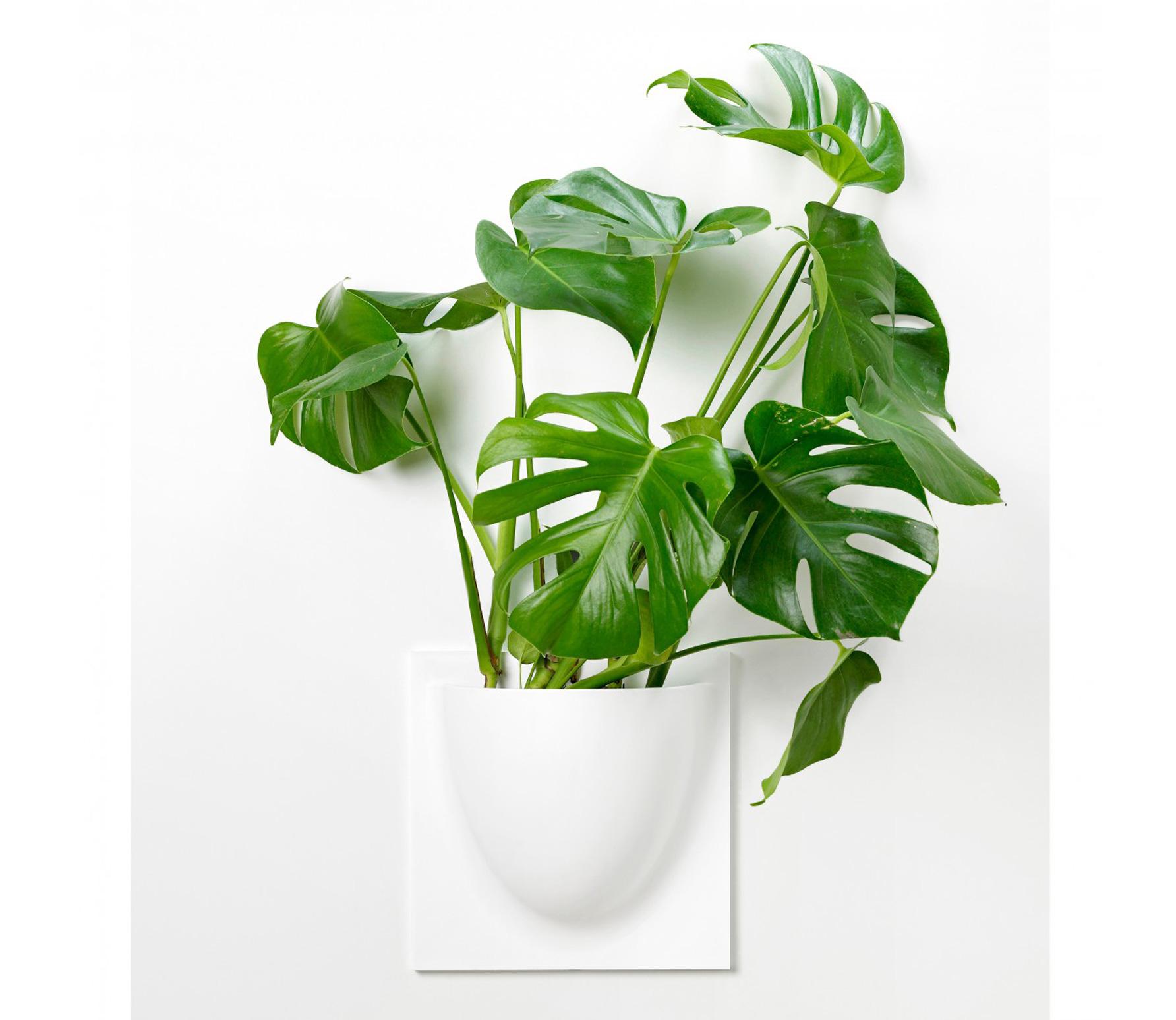 Favoriete ▷ Kunststof plantenbak kopen