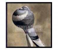 Poster Pigeon XL kleur  incl. lijst